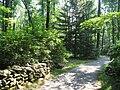 Graver Arboretum - 337.jpg