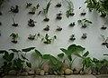 Green wall at Lynn cafe - panoramio.jpg