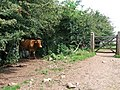 Guardian of the Gate, Rhymney Valley Ridgeway Path - geograph.org.uk - 899567.jpg