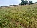 HAYAL MUGHLAN - panoramio (4).jpg