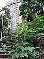 HK 九龍城 Kowloon City 何文田 Ho Man Tin 公主道 Princess Margaret Road June 2019 SSG 39.jpg