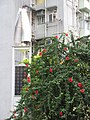 HK 灣仔 Wan Chai 囍匯 The Avenue Rooftop Garden terrace plants Oct 2017 IX1 red flowers 03.jpg