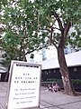 HK Central City Hall 愛丁堡廣場 Edinburgh Place 香港大會堂紀念花園 Memorial Garden trees Dec 2018 SSG 17.jpg
