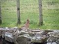 Hadrian's Wall and a Grumpy Bird - geograph.org.uk - 1012545.jpg