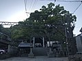 Haiden of Ushitora Shrine and camphor trees.jpg