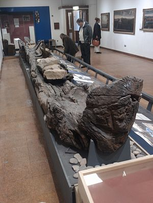 Hanson Log boat in Derby Museum.jpg