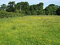 Hay meadow, Dumblehole - geograph.org.uk - 843189.jpg