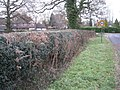 Hedge by Earlswood Road B93 - geograph.org.uk - 2195520.jpg