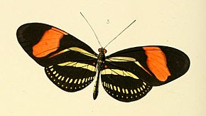 Description de l'image Heliconia hermathena - Illustrations of new species of exotic butterflies Heliconia II (cropped).jpg.