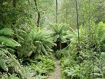 Tasmania-Ecology-Hellyer Gorge, Tasmania