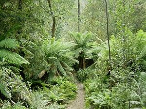Hellyer Gorge, Tasmania
