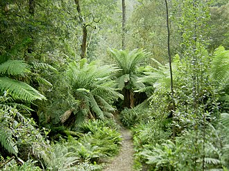 Flora of Australia - The Tasmanian rainforest is considered a Gondwanan relic.