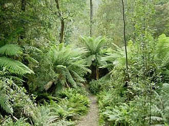 Flora of Australia - The Tasmanian rainforest is considered a Gondwanan relic.