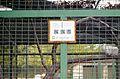Helmeted guineafowl - QRpedia at Skopje Zoo.JPG