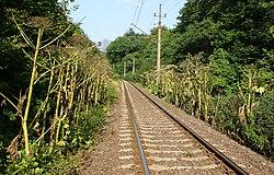 Heracl sosn railway kz.jpg