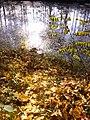 Herbst am Kuthfließ bei Eisenhüttenstadt - panoramio (1).jpg
