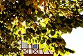 Herbstlaub - panoramio (7).jpg