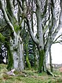 Highcliffe Wood - geograph.org.uk - 299403.jpg