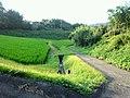 Hizumi, Yanai, Yamaguchi Prefecture 742-0111, Japan - panoramio (3).jpg