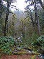Hoh Rain Forest - Flickr - GregTheBusker.jpg