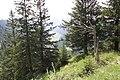 Hoher Kasten - panoramio (203).jpg