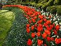 Holandia Keukenhof - panoramio (15).jpg