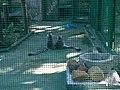 Hong Kong Zoological and Botanical Gardens 12.jpg