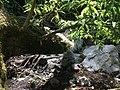 Hongos en manantial del arroyo Ahuacapan.jpg