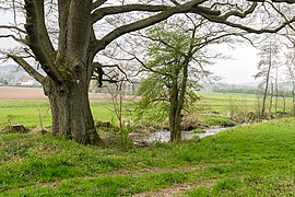 Horn-Bad Meinberg - 2015-04-25 - LIP-027 Wiembecketal (24).jpg