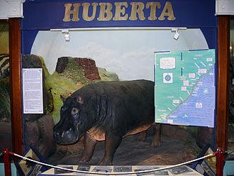 Amathole Museum - Huberta exhibit