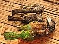 Hunting Barbet, Ashy Bulbul.jpg