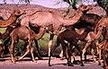 India (64885740).jpg