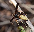 Insect of some kind (33206335513).jpg