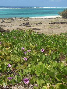 Hutan Pantai Wikipedia Bahasa Indonesia Ensiklopedia Bebas