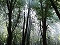 Irmak orman içi mesire yeri - panoramio.jpg