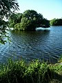 Island, Attenborough Nature Reserve - geograph.org.uk - 202847.jpg