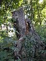Israelitischer Friedhof Währing September 2006 021.jpg