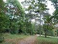 Jókai kertje 2012 (52).JPG
