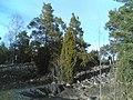 Jakomäki pirunpelto - panoramio.jpg