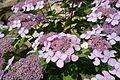 Japanese garden @ Fort d'Issy-les-Moulineaux (34984261081).jpg