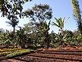 Jardim das Aroeiras, Goiânia - GO, Brazil - panoramio (4).jpg