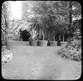 Jardin avec des arbustes en pot (5470655831).jpg