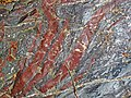 Jaspilite banded iron formation (Soudan Iron-Formation, Neoarchean, ~2.69 Ga; Stuntz Bay Road outcrop, Soudan Underground State Park, Soudan, Minnesota, USA) 9 (18602538014).jpg
