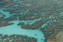 Una barriera corallina al largo dell'isola Juan de Nova.
