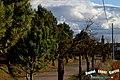 Junto a una espléndida tarde primaveral, en el ribazo de la carretera Requena - panoramio.jpg