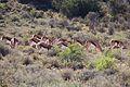 Karoo National Park 2014 16.jpg