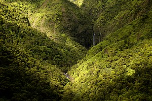 Forest near Hanalei Bay, Kauai, Hawaii