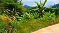 Khao Sok, 2014 December - panoramio (68).jpg