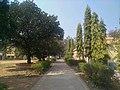 Khatra Adibasi Mahavidyalaya campus (2).jpg