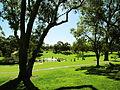 Kings Park - la pelouse sous le soleil.JPG